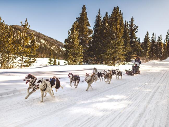 Dogsledding wedding exit