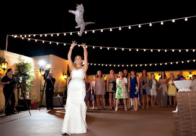 Brides Throwing Cats Meme