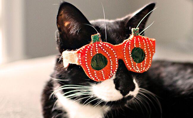 cb95e7d3d2 etsy pet halloween costume glasses