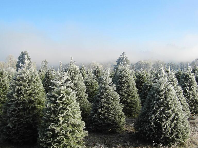 Christmas tree farms where you can actually get married