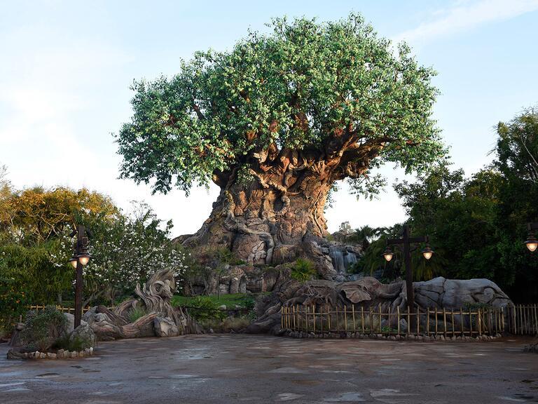 Disney's Animal Kingdom, Walt Disney World as a romantic proposal destination