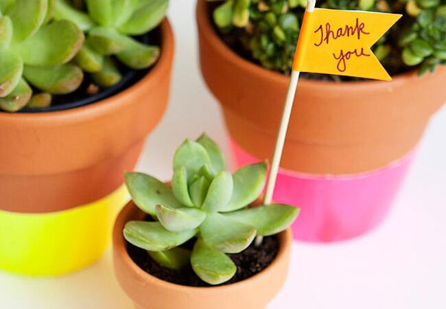 Neon Dipped Succulent Favors