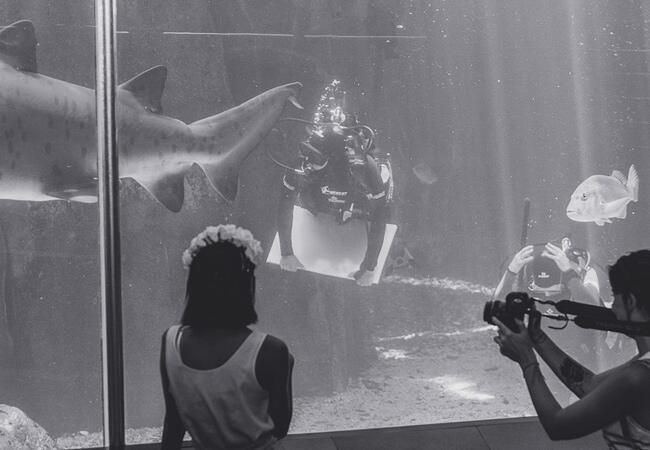 Proposal Inside An Aquarium Tank