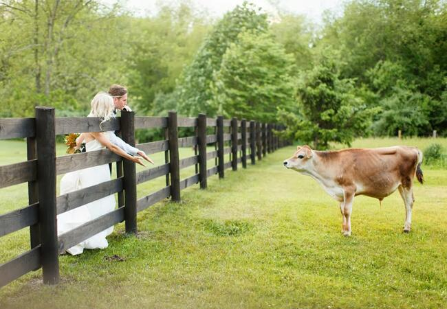 Unexpeted Animal Wedding Photos