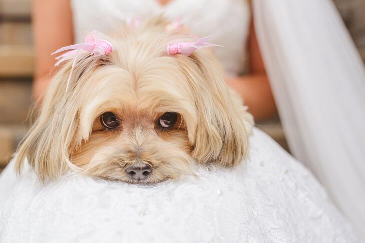 Dog hair bows wedding accessories