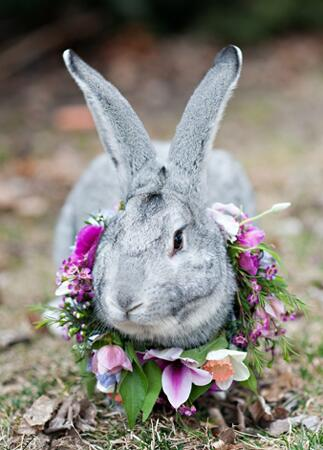 Bunny wedding inspiration: Kristina Curtis Photography / TheKnot.com