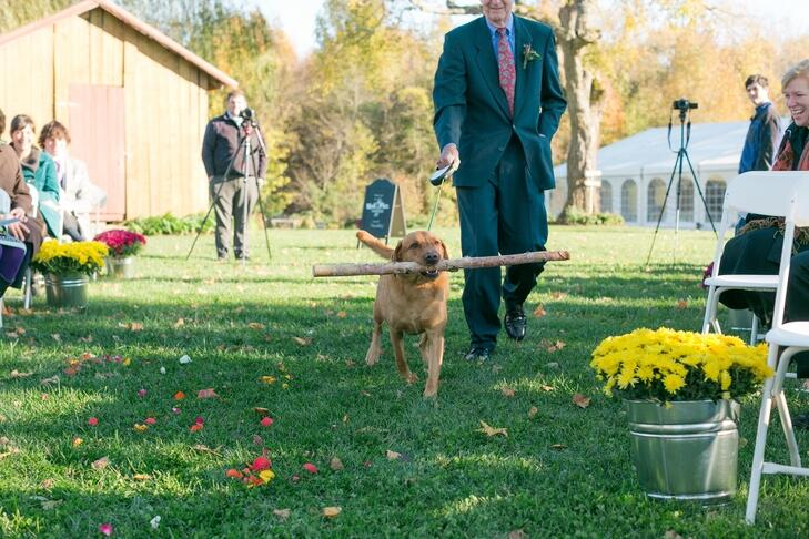 Dog walking down aisle with stick at fall wedding