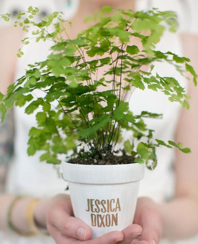 Potted Fern Escort Card