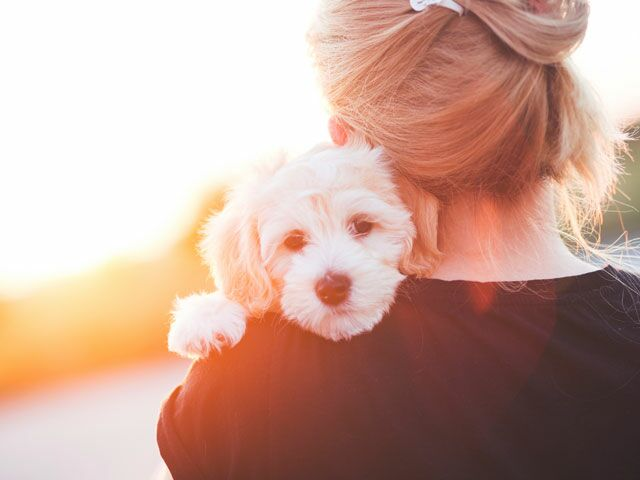 Benadryl For Dogs Dosage And Side Effects