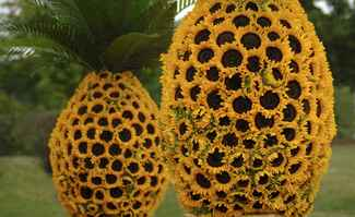 Sunflower Pineapple