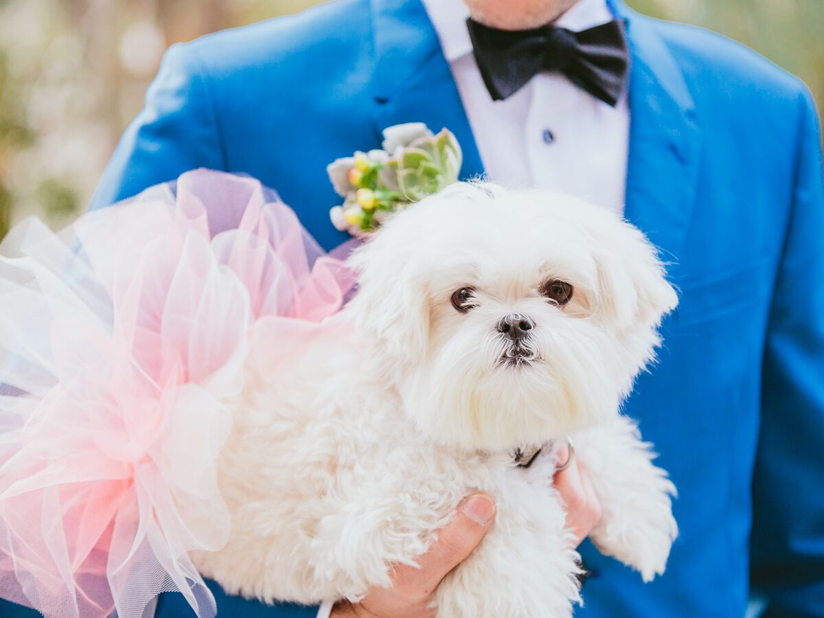 Wedding dog in a pink tutu