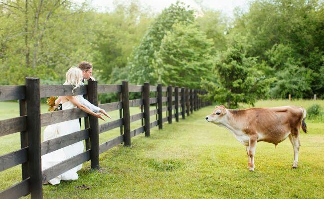 8 Cute Animal Wedding Photos