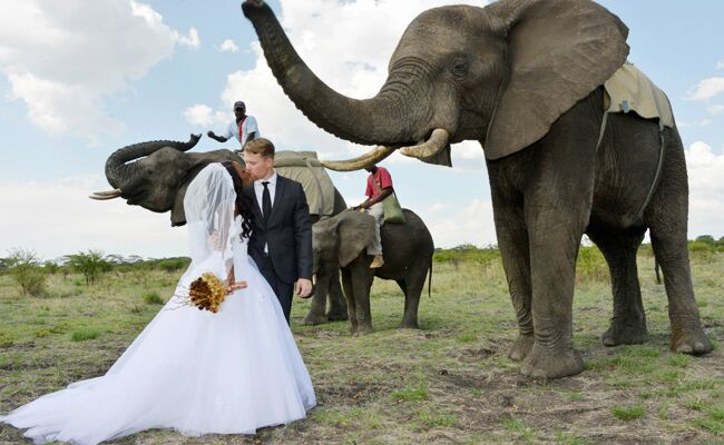 An Elephant Entrance (And More!) At This Wedding In Zimbabwe