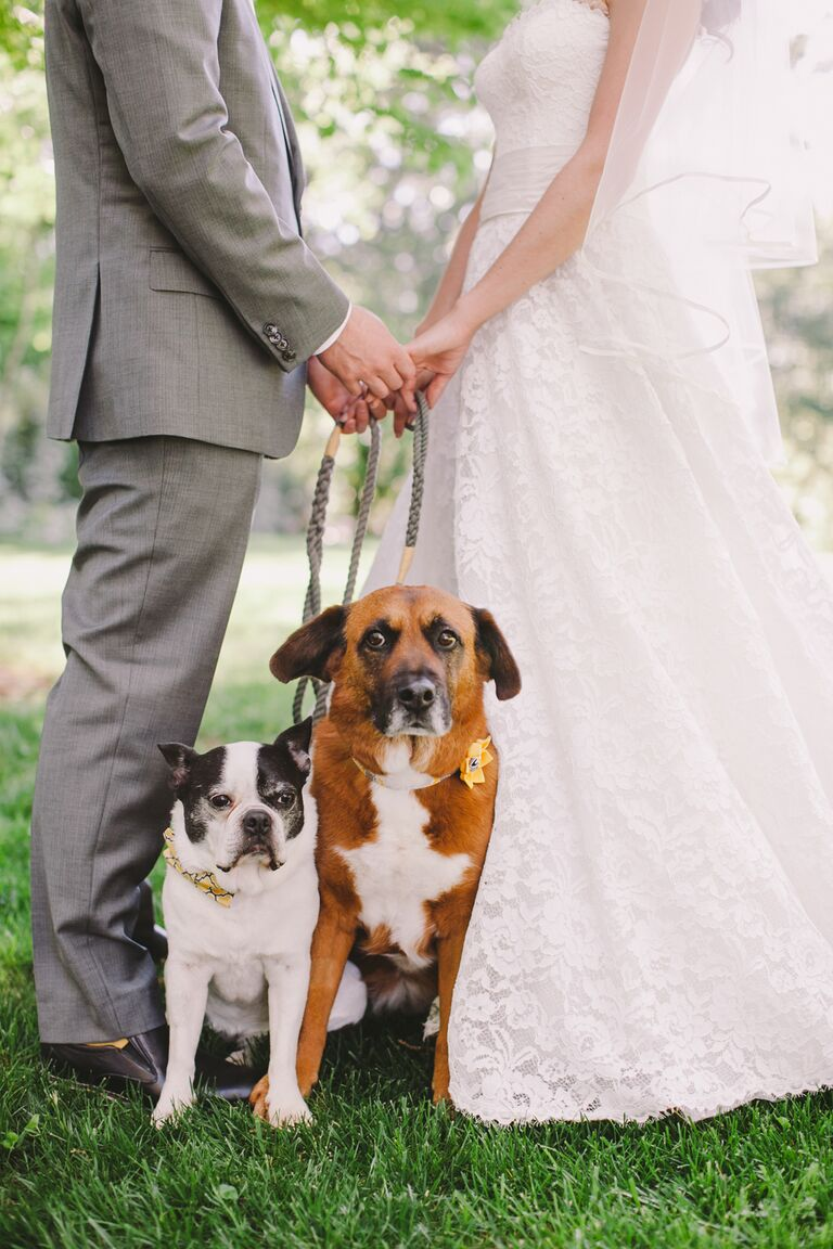 Wedding dogs 7 ways to dress your wedding dog wedding dog idea coordinating collars ombrellifo Image collections