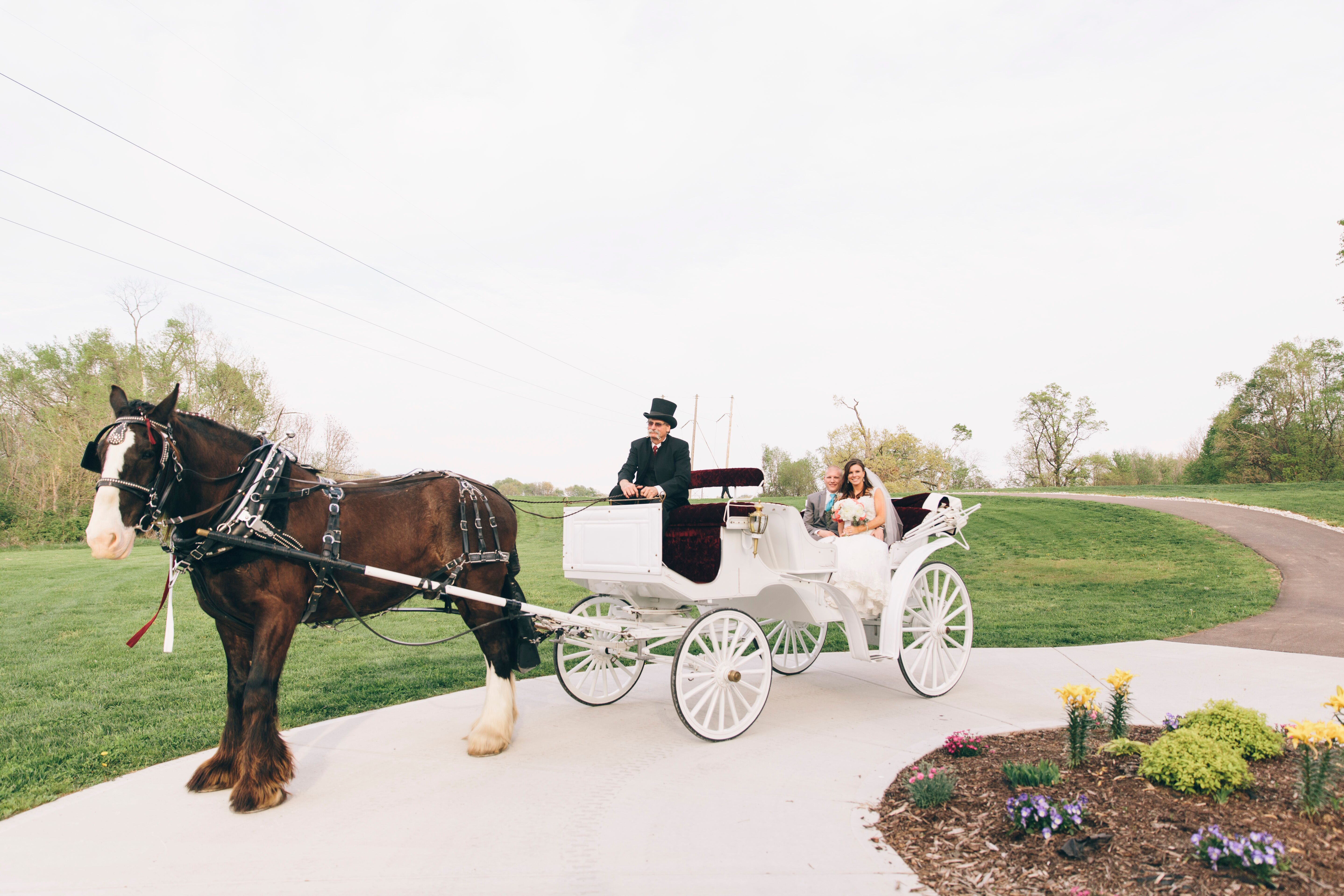 Horse-Drawn Carriage Procession