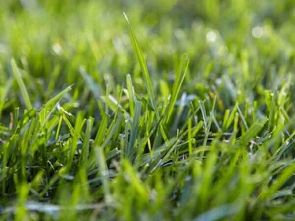 If you love your lawn, but can't keep up with the watering, then these five grass types are for you.