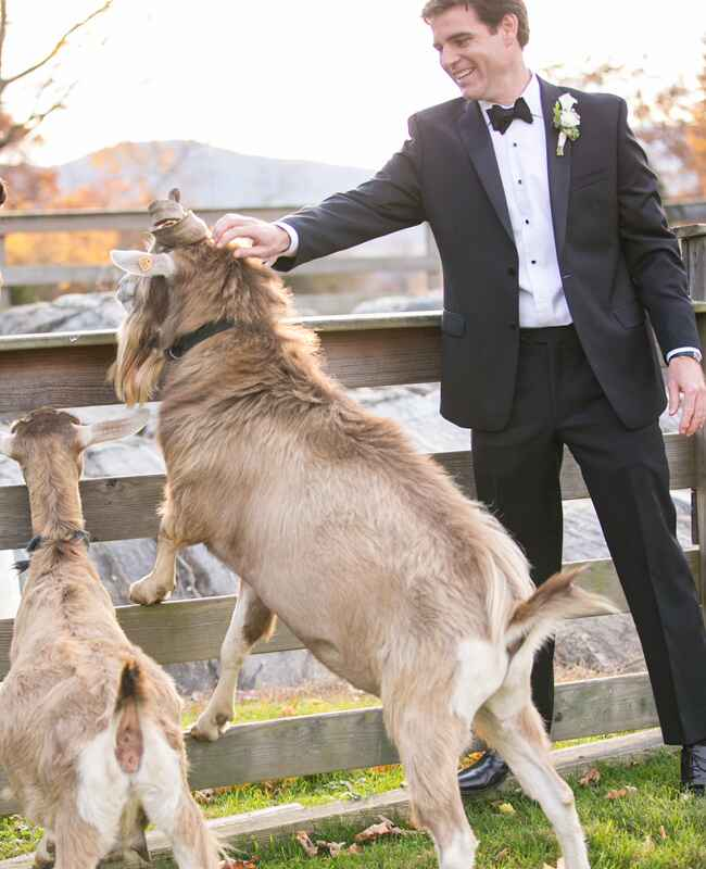 Unexpected Animal Wedding Photos