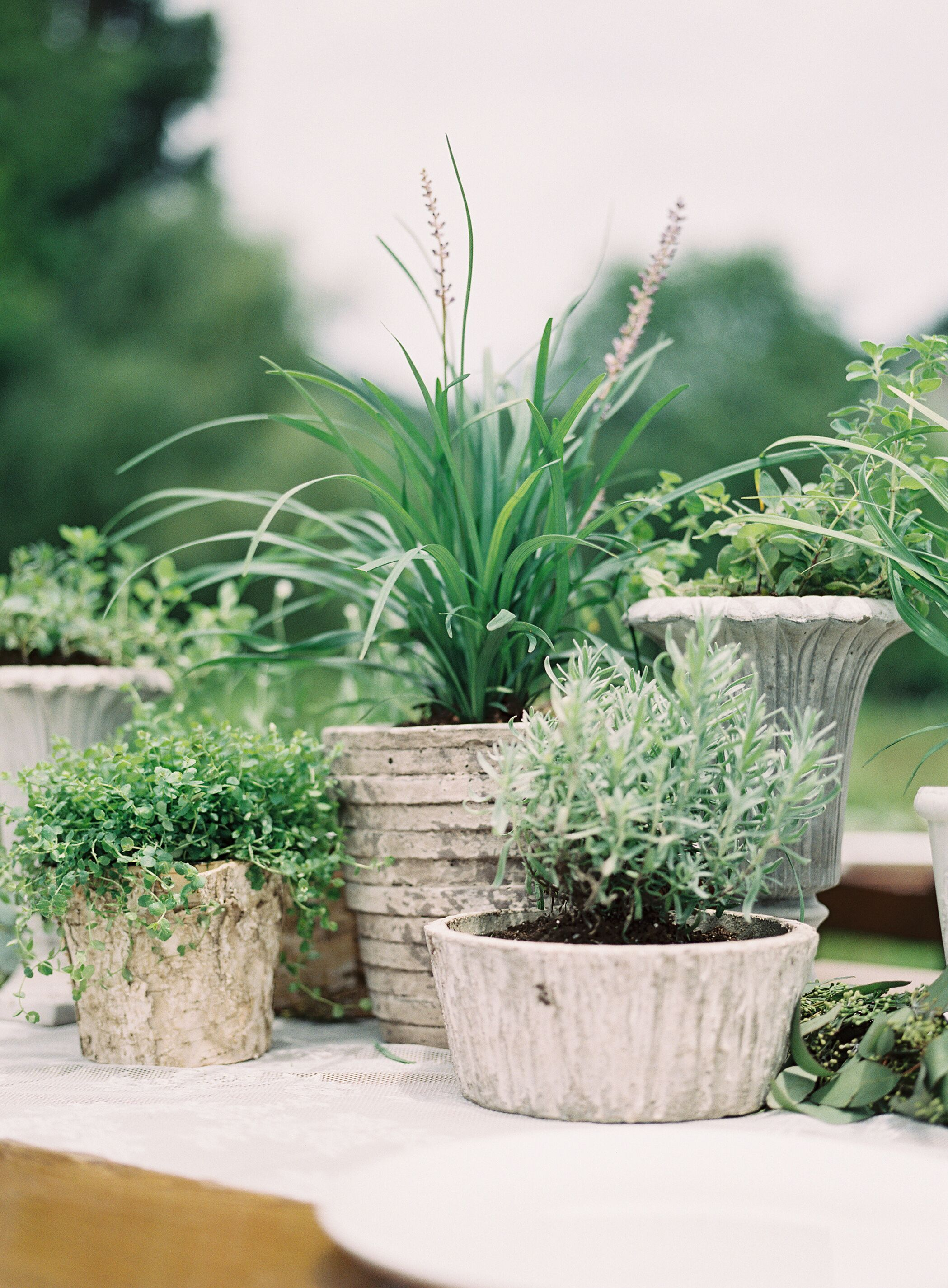 Organic potted plant centerpieces for Outdoor decorating with potted plants