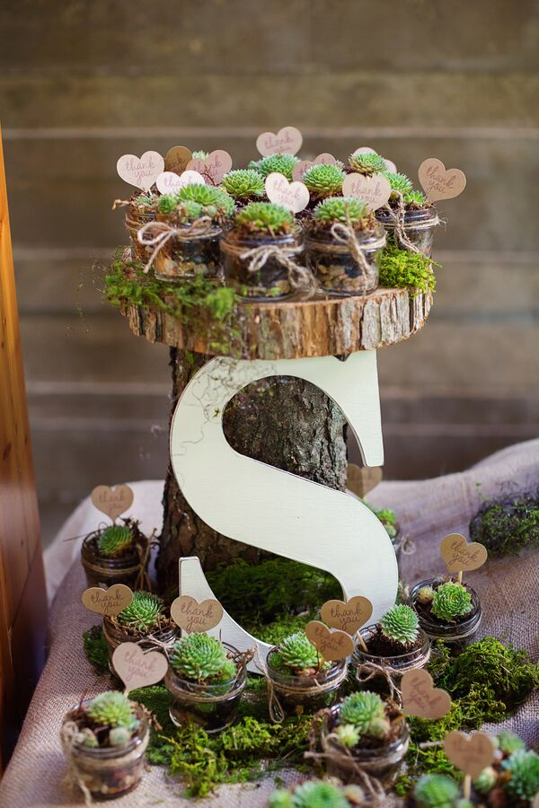 Potted Succulent Wedding Favor