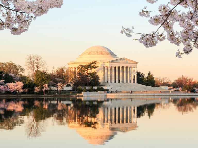 Jefferson Memorial cherry blossom marriage proposal