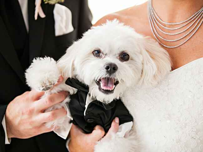 Dog wearing tux with bride and groom