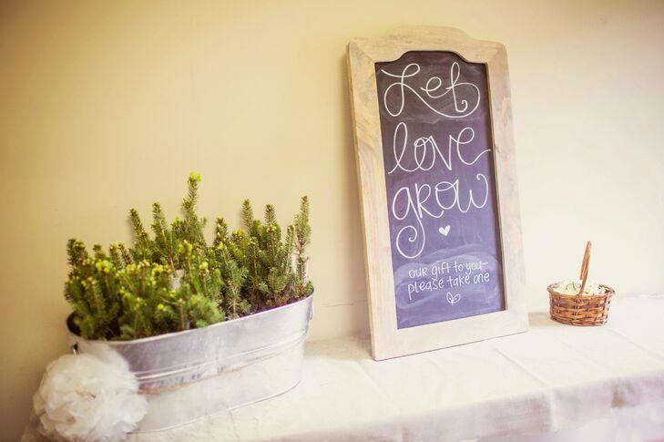 Evergreen Tree Sapling Wedding Favors