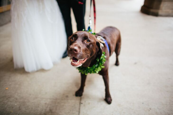 Wedding Dog with Green Garland