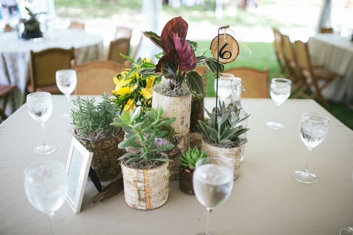 Potted Succulent And Herb Centerpieces