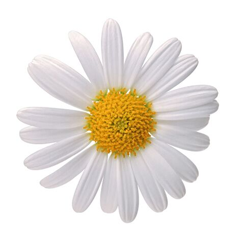 Your complete guide to wedding flowers fhj event planner queen you may find the daisy a fitting flower for your wedding if you plucked its white petals in a game of he loves me he loves me not as a child mightylinksfo