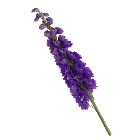 purple delphinium flwoer