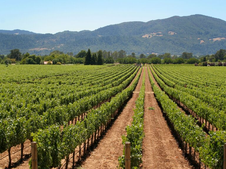Napa and Sonoma Valley Honeymoon 101