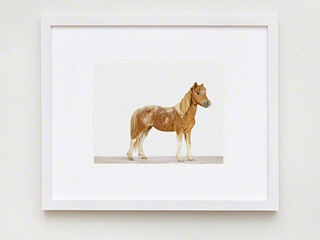Equine Decorating Ideas Under 200