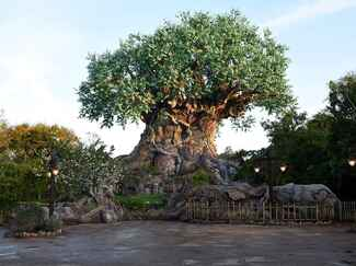Disney's Animal Kingdom, Walt Disney World as a romantic proposal destination