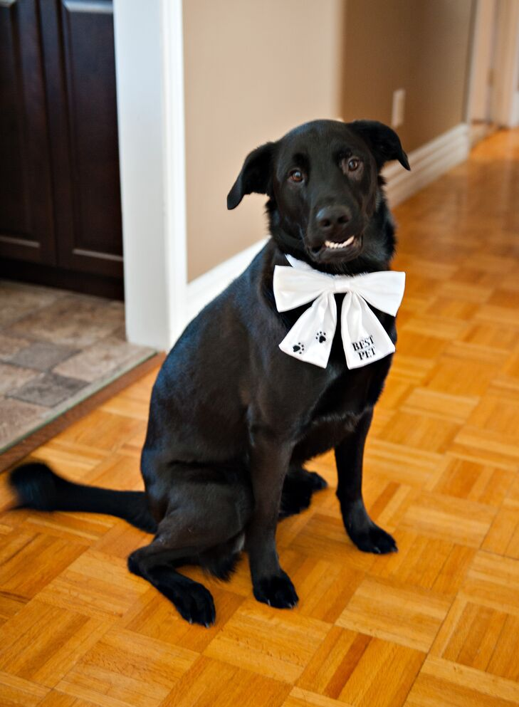 The couple's dog was included in the wedding, sporting a lovely big white bow tie.