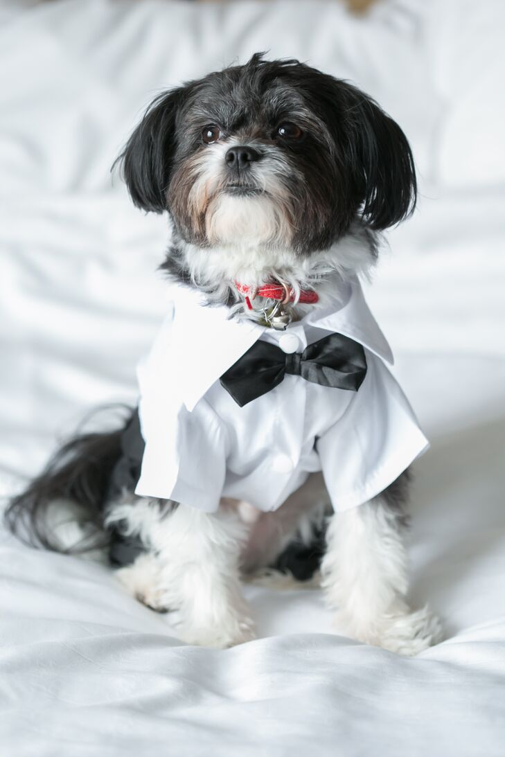 The couple's cute dog wore a crisp white dress shirt and a black bow tie and served as the couple's ring bearer.