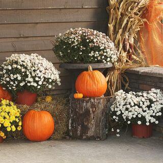 al a rustic autumnal wedding in cullman al