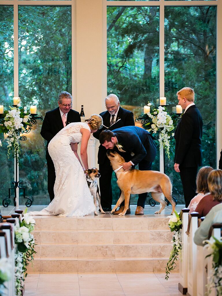 Unique wedding ceremony idea including family pets