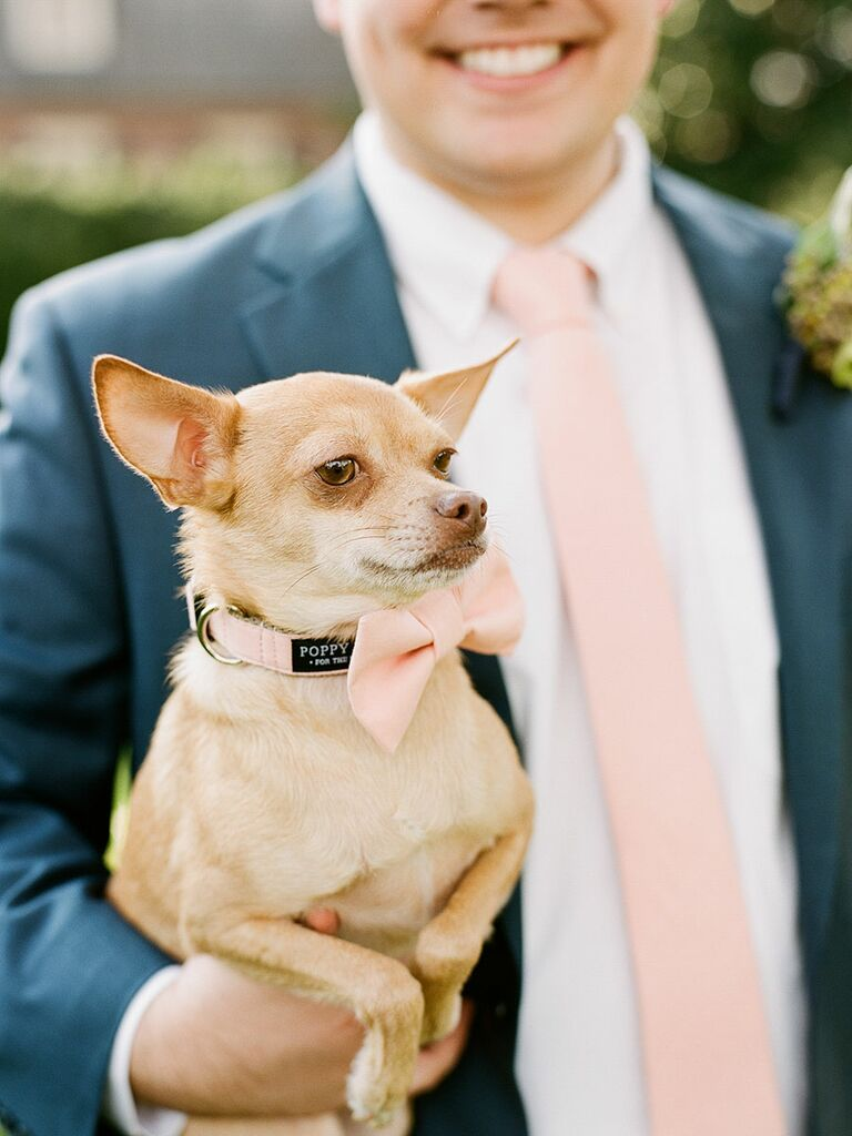 Pets must have photo to take at your wedding