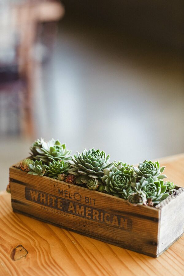 Succulent Reception Decor