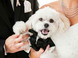 You Have to See This Adorable Therapy Dog Wedding