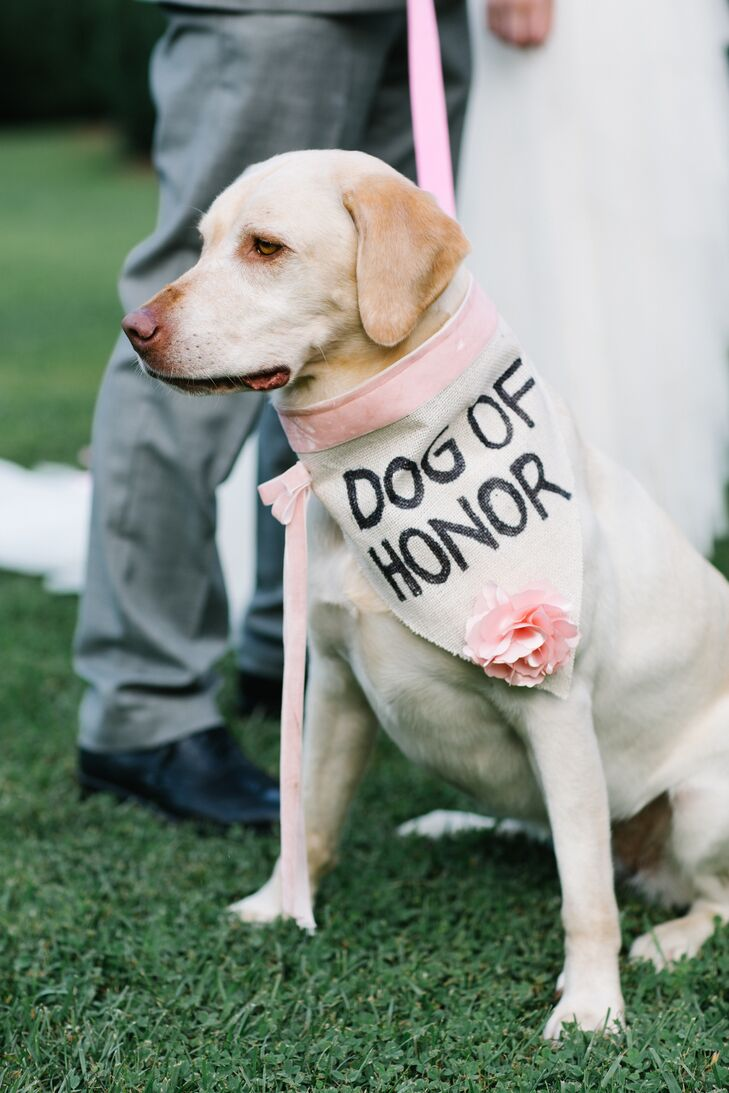 """Our dog Aspen is a wild woman. She is definitely our best pal and we take her with us almost everywhere,"" Kate says. ""When we decided to make her the flower girl, ring bearer, and dog of honor—we drew the line at officiant—we fully expected her to do something crazy or just bark for the entire ceremony. We were absolutely shocked when she laid down for the whole ceremony. She was so comfortable that we had to drag her away when we turned to walk out. I made her a 'dog of honor' collar with the help of my mother-in-law and her sewing skills. It was so easy to make, and I absolutely love all her pictures. She also had quite the time ripping it to shreds after the family photos. I didn't even try to stop her!"""