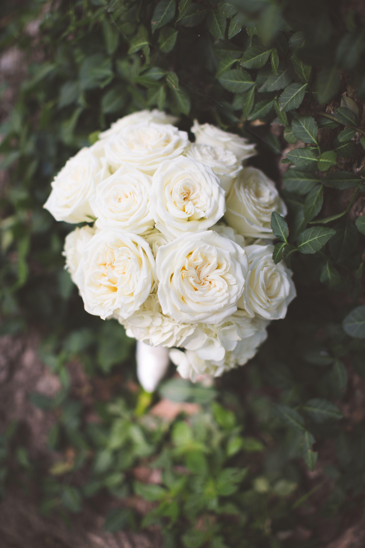 Simple Rose Garden: Simple White Garden Rose Round Bridal Bouquet