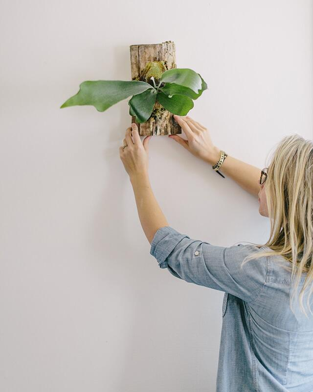 woman hanging plant