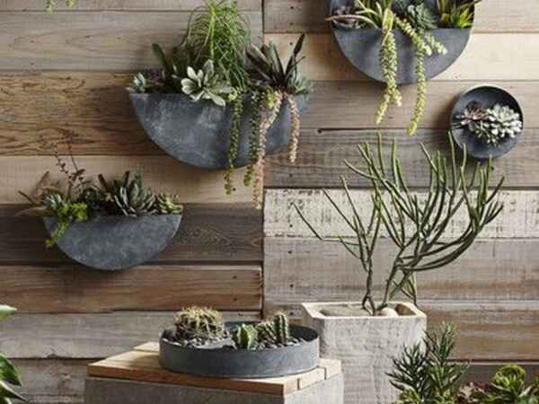 Liven up Your Home With A Living Wall