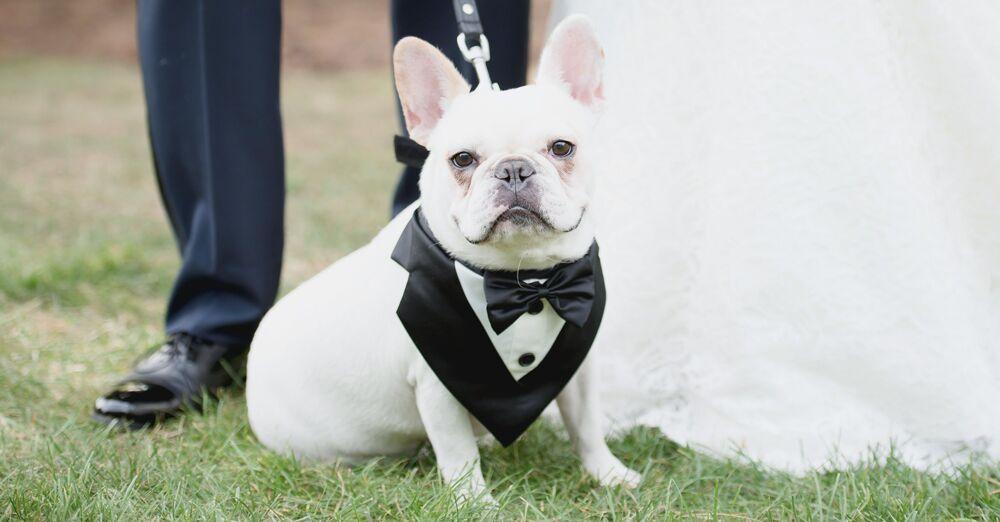 Black Tie Formal Event Top Hat Pet Dog Costume Accessory