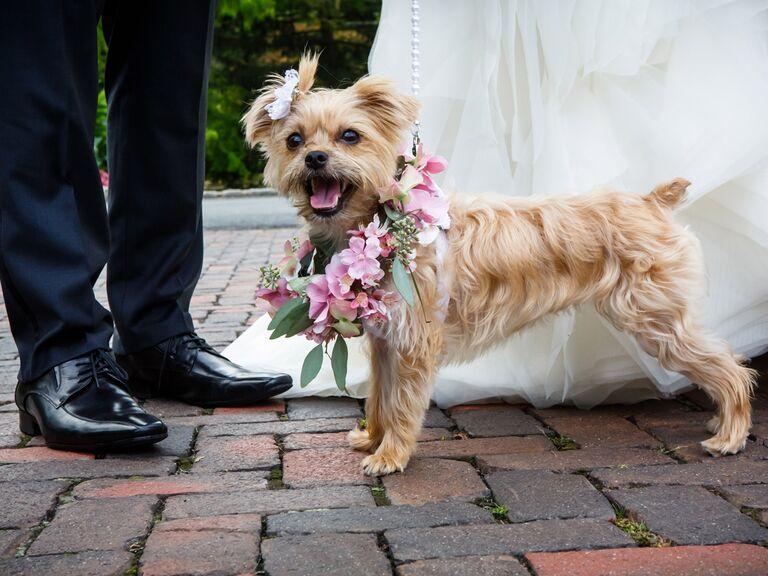 Wedding Dogs: 7 Ways to Dress Your Wedding Dog