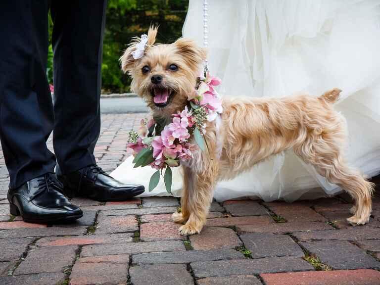 Wedding Dogs 7 Ways To Dress Your Wedding Dog