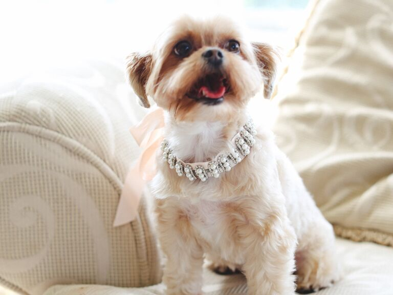 Dog with Faux Pearl Collar