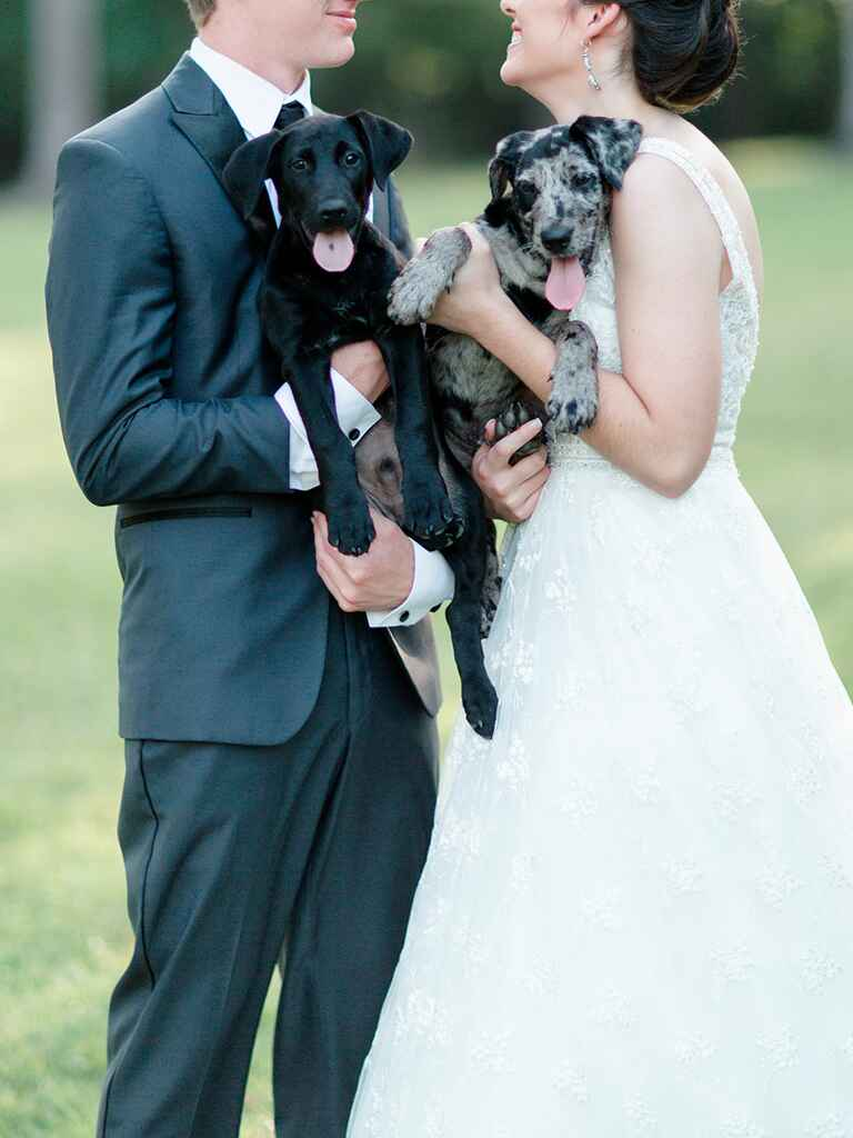 Bride and groom with puppies
