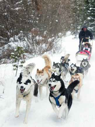 Newly Weds Dogsledding